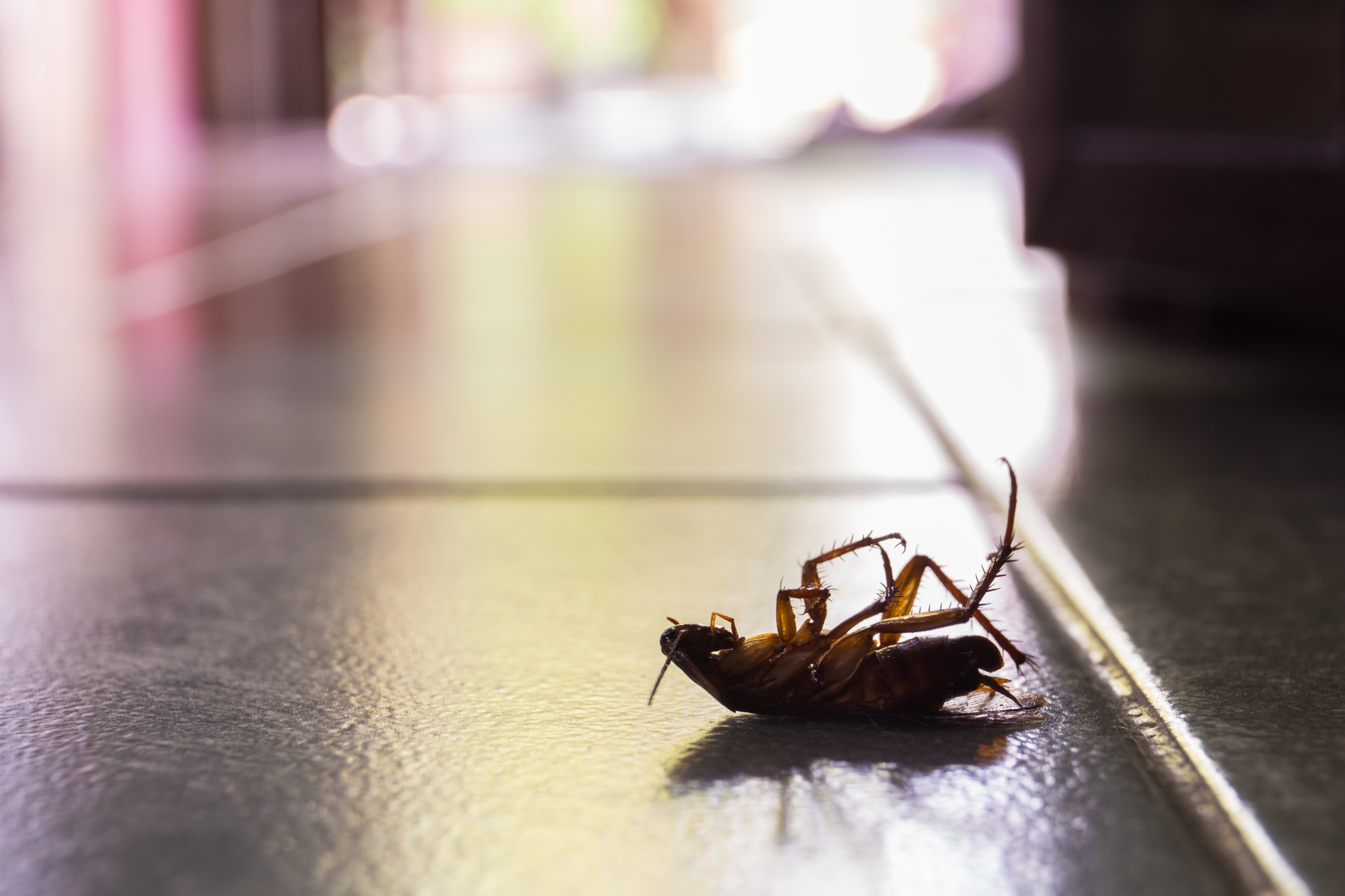 Cockroach Control, Pest Control in Stanmore, Queensbury, HA7. Call Now 020 8166 9746