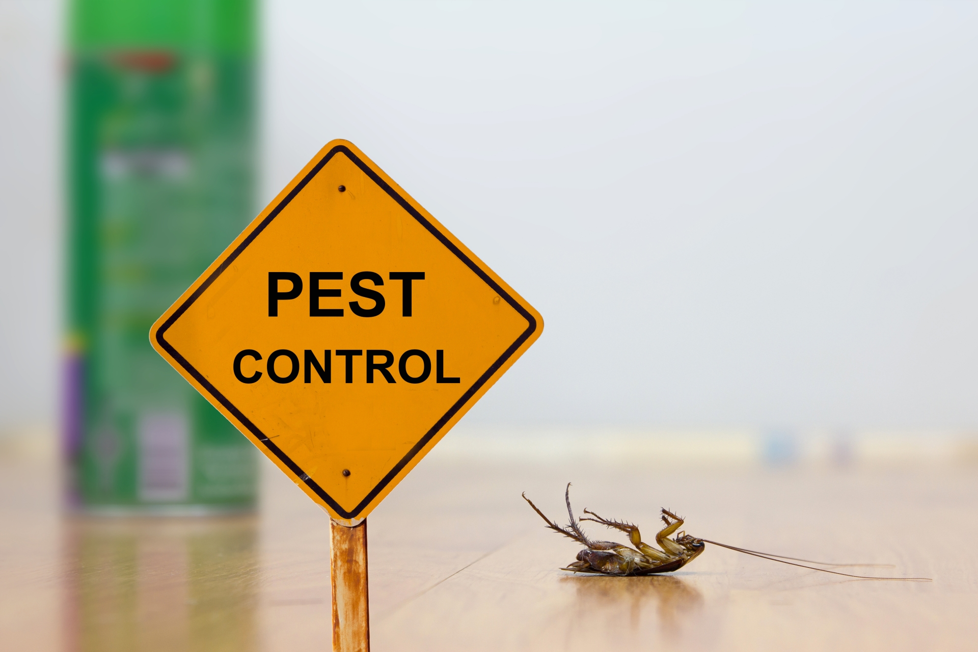 24 Hour Pest Control, Pest Control in Stanmore, Queensbury, HA7. Call Now 020 8166 9746